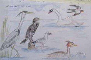 Hand drawn image of wildlife at Swallowdale holiday home